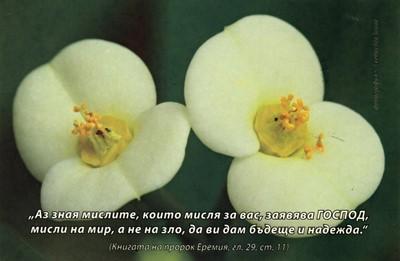 Еднолистна картичка със стих - Еремия 29:11 [Подаръци/Сувенири]