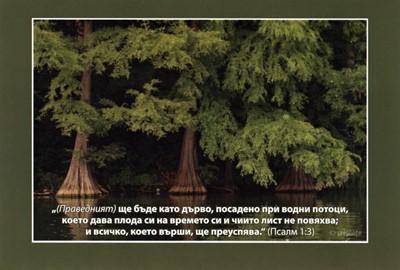 Еднолистна картичка със стих - Псалм 1:3 [Подаръци/Сувенири]