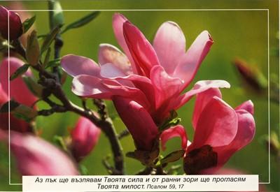 Еднолистна картичка със стих - Псалм 59:17 [Подаръци/Сувенири]