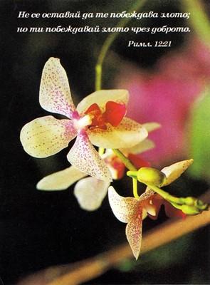Еднолистна картичка със стих - Римляни 12:21