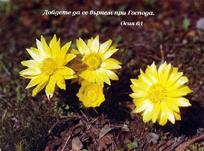 Еднолистна картичка със стих - Осия 6:1 [Подаръци/Сувенири]