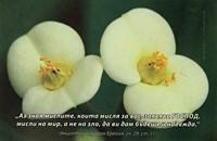 Еднолистна картичка със стих - Еремия 29:11