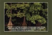 Еднолистна картичка със стих - Псалм 1:3