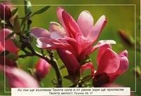 Еднолистна картичка със стих - Псалм 59:17