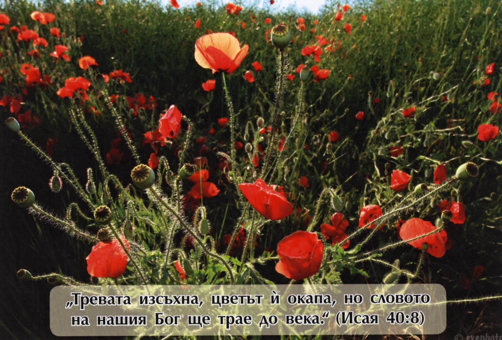 Еднолистна картичка със стих - Исая 40:8