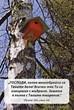 Еднолистна картичка със стих - Псалм 104:24